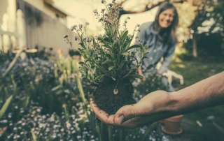 dream planting